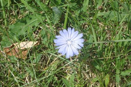 albastru4