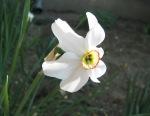 flori-15