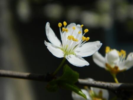 flori-284