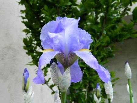 flori-386