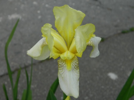 flori-389