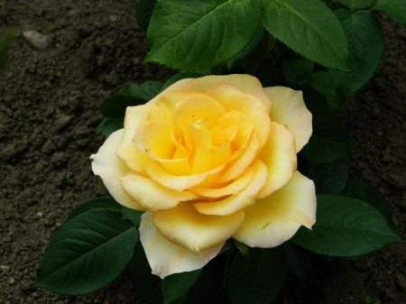 flori-423