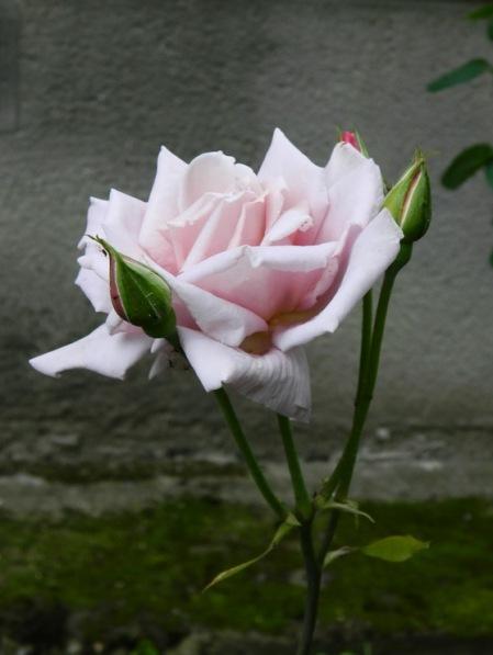 flori-440
