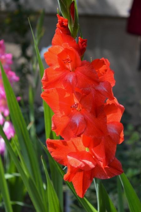 flori-449
