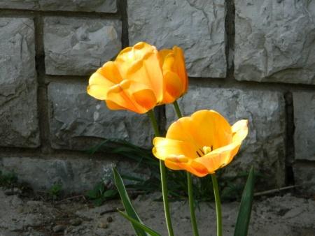 flori-485