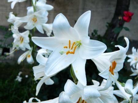 flori-448